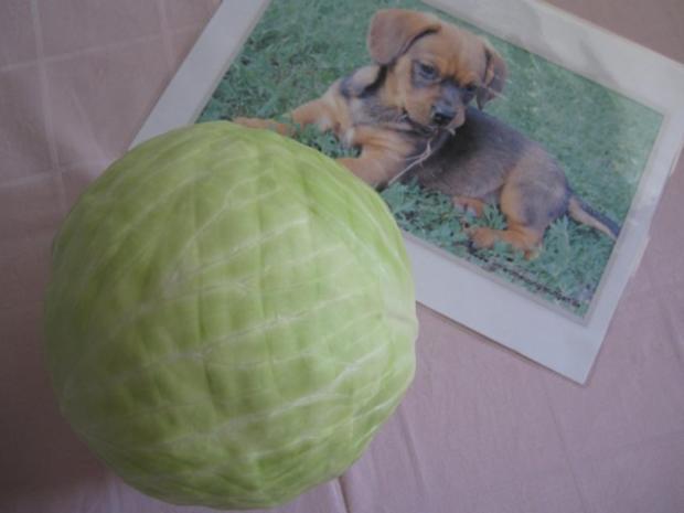 Weißkrautsalat, kroatische Art - Rezept - Bild Nr. 2