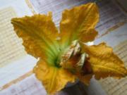 Zucchiniblüten gebacken - Rezept