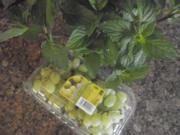 Weintrauben - Minze - Gelee - Rezept