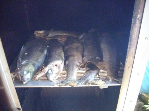 Forellen geräuchert - Rezept - Bild Nr. 9