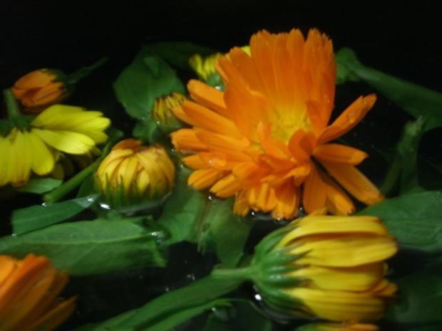 Ringelblumensirup - Rezept - Bild Nr. 3