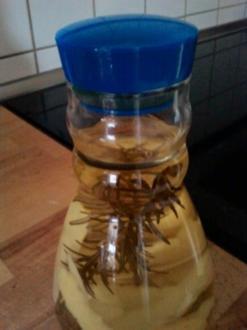 Zitronen-Rosmarin-Essig - Rezept