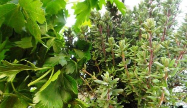 Wurst-Pfanne mit Gemüse auf Senf-Saucen-Spiegel - Rezept - Bild Nr. 7
