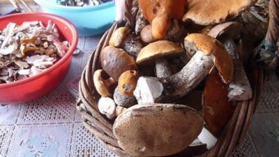 Pilzeintopf ( vogtländische Schwammespalken ) - Rezept