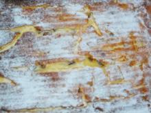 Käsekuchen vom Blech - Rezept