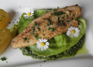Zander auf Salat - Püree - Rezept
