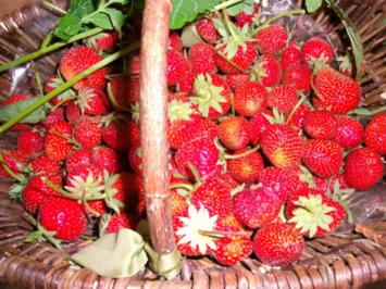 Erdbeerkonfitüre - Rezept