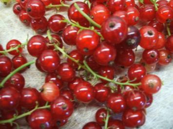 Vorrat: Rote Johannisbeeren - Verwertung - Rezept