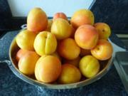 Aprikosenmarmelade - Rezept