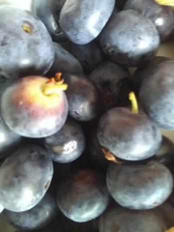Mascarponecreme mit frischen Beeren - Rezept - Bild Nr. 12