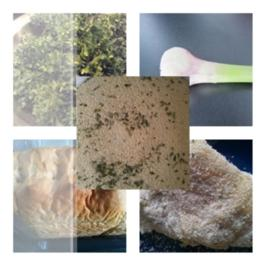 Rezept: Aioli Petersilien Panade (500 Gramm) Paniermehl