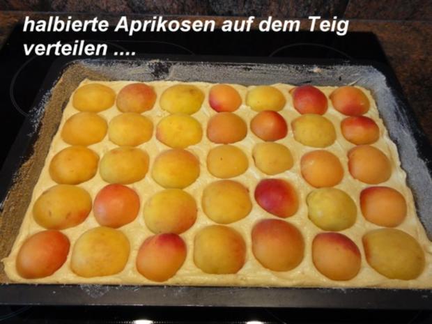 Rezept kasekuchen aprikosen streusel