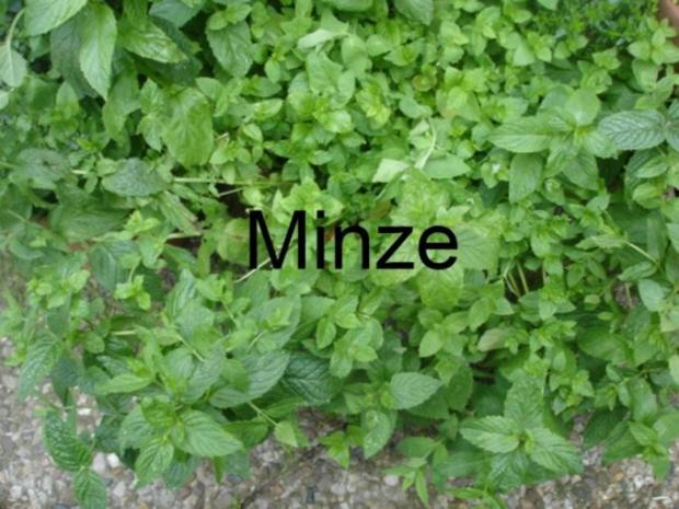 Minze-Salbei-Rosmarin-Buletten mit grünen Bohnen und Mais-Kartoffelpüree - Rezept - Bild Nr. 6