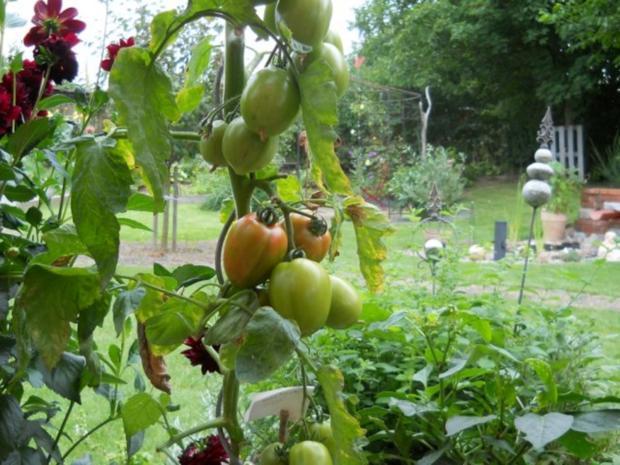 Tomatensuppe mit Sellerie - Rezept - Bild Nr. 2