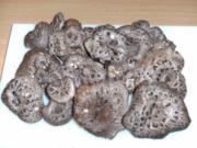 Pilze: Der Habichtspilz - Rezept