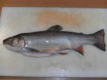 Fisch: Saibling, gebeizt - Rezept