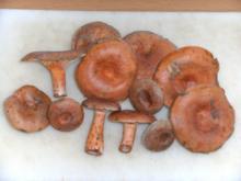 Pilze: Der Echte Reizker - Rezept