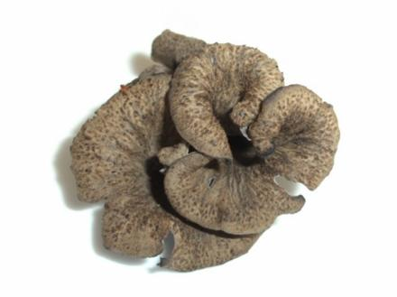 Pilze: Die Totentrompete - Rezept