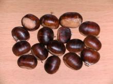 Konservieren: Ernte, Behandlung und Konservieren von Kastanienfrüchten - Rezept