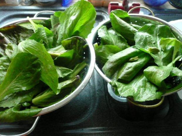 salat feldsalat mit wachtelbr stchen rezept. Black Bedroom Furniture Sets. Home Design Ideas