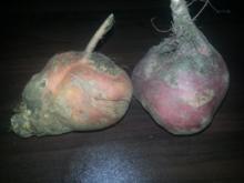 Lachsfilet auf Kartoffelbett mir geringelten rote Beete - Rezept