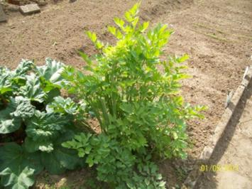 Gewürze: Gemüsebrühepulver - Rezept