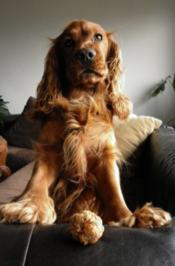 Hundebällchen Variante 3 - Rezept