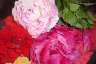 rosensirup---herrlicher geruch an händen und in der küche - Rezept
