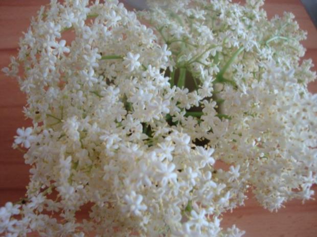 frittierte hollerblüten zum kaffee-wieder ne schöne kindheitserinnerung - Rezept - Bild Nr. 10