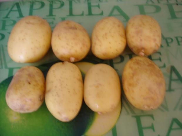 Forelle Müllerin mit Tomaten-Paprika-Gurken-Gemüse und Kartoffelpilzen - Rezept - Bild Nr. 14