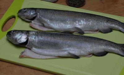 Fisch : Gebackene Forellen auf Sauce Hollandaise mi Dill - Rezept
