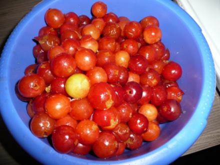 Rote Mirabellen - Gelee - Rezept
