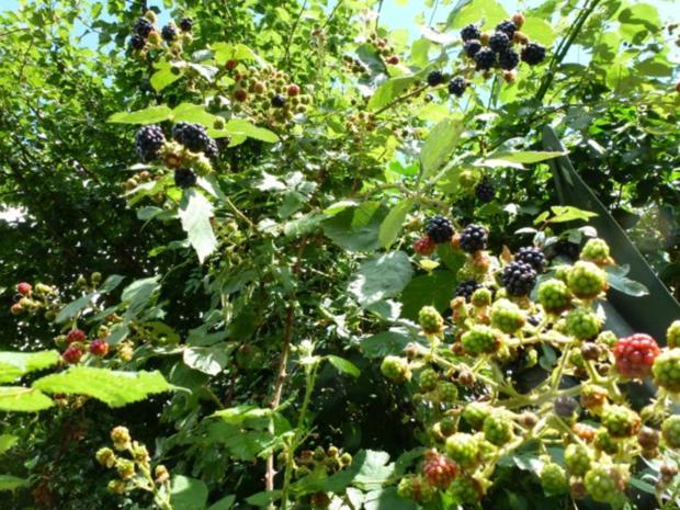 Fruchtiger Wackelpudding mit Vanillesauce - Rezept - Bild Nr. 7