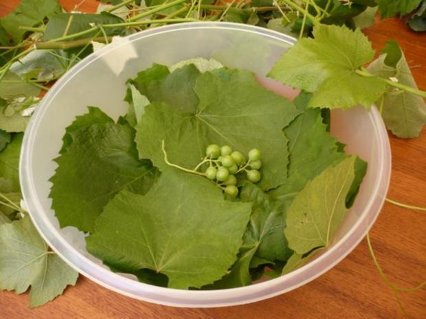 Weinblätter würzig gefüllt - Rezept - Bild Nr. 3