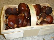 Pilze mit Feuerbohnen - Rezept