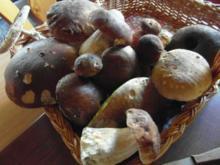 frische Waldpilze  in Rahmsosse mit hausgemachten Semmelknödeln - Rezept