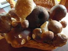 Pilzrahmsüppchen von frischen Waldpilzen - Rezept