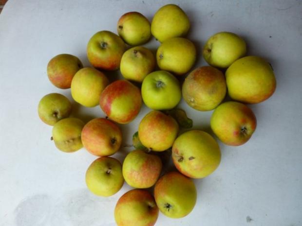Apfelbrei mit Stevia - Rezept - Bild Nr. 2