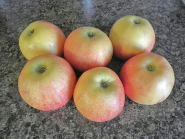 Apfelkuchen mit Zimt - Schmandguss - Rezept - Bild Nr. 6