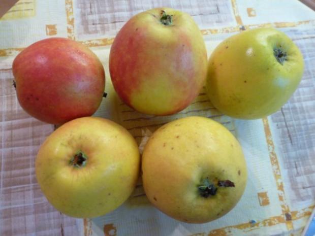 Quark-Apfel-Kuchen - Rezept - Bild Nr. 2