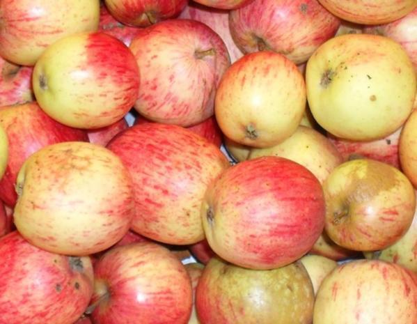 Apfelmus - Rezept - Bild Nr. 2