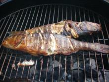 Fisch: Wolfsbarsch mit Rosmarin geräuchert - Rezept