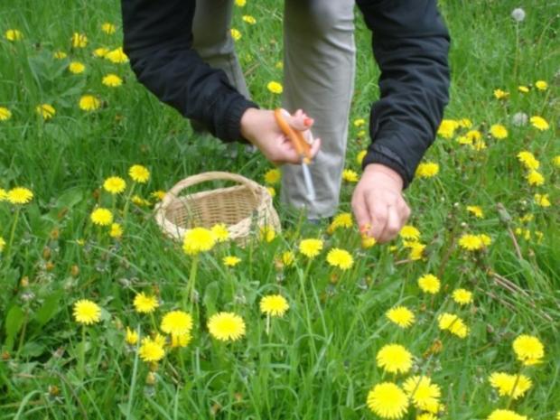 Löwenzahnblüten-Honig - Rezept - Bild Nr. 2