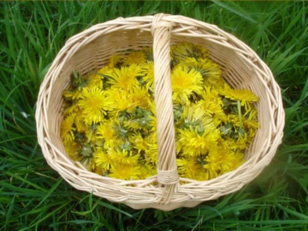 Löwenzahnblüten-Honig - Rezept - Bild Nr. 3