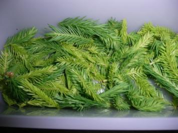 Tannen - Spitzen - Likör - Rezept