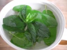 Heiße Getränke : Schokominze - Salbei -Tee - Rezept