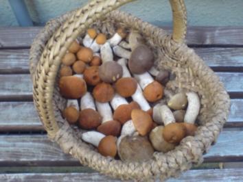 Wald-Pilze auf Brot - Rezept