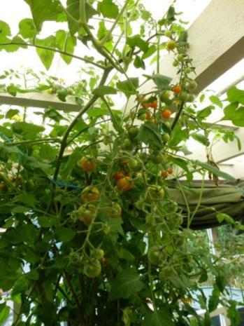 Meine würzige Lieblings Tomaten-Kräutersauce - Rezept - Bild Nr. 3