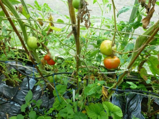 Meine würzige Lieblings Tomaten-Kräutersauce - Rezept - Bild Nr. 4
