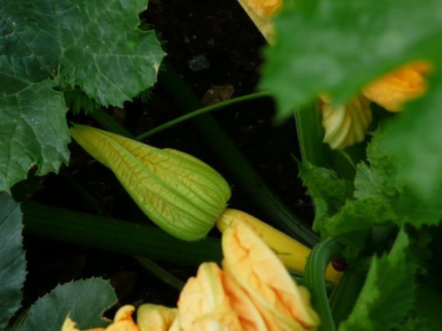 Einmachzeit hat begonnen. Gurken & Gemüse süß - sauer. - Rezept - Bild Nr. 5